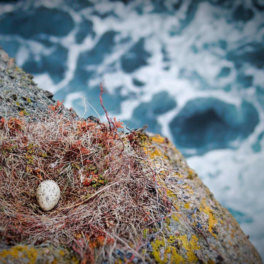 EggOcean-1.jpg